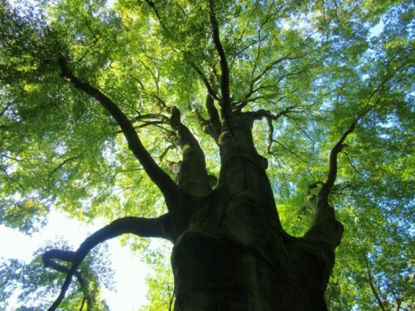 Baum Naturtanz klein (640x480)
